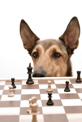Teaching Dog Tricks Video