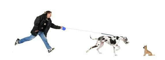 Dog Walking Training Classes