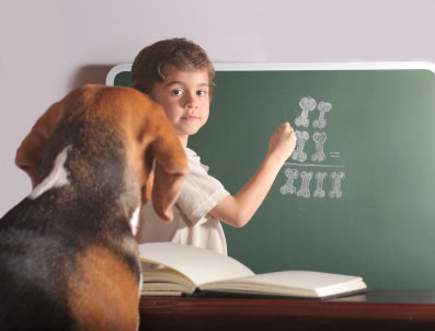 Dog and blackboard